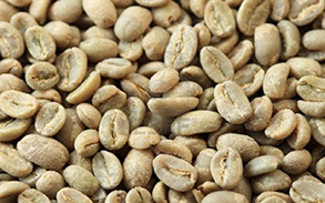 10526259-green-coffee-beans-background-at-an-angle-with-selective-focus